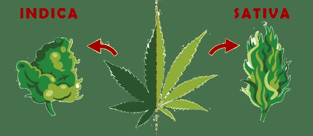 THC and CBD relationship