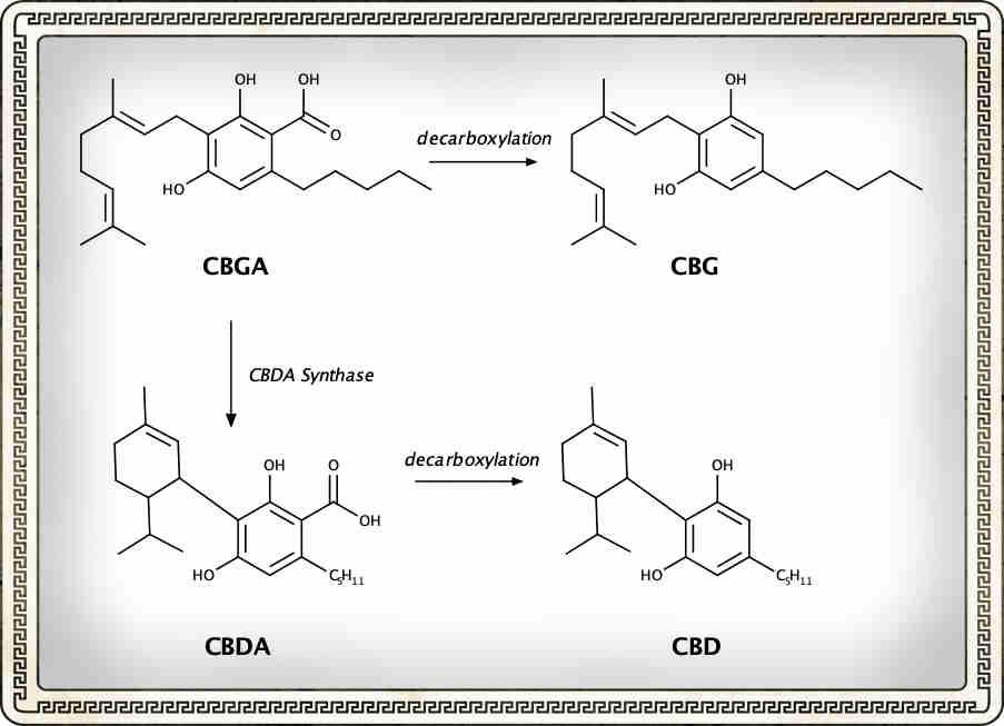 CBD vs CBG, what's the differencce?